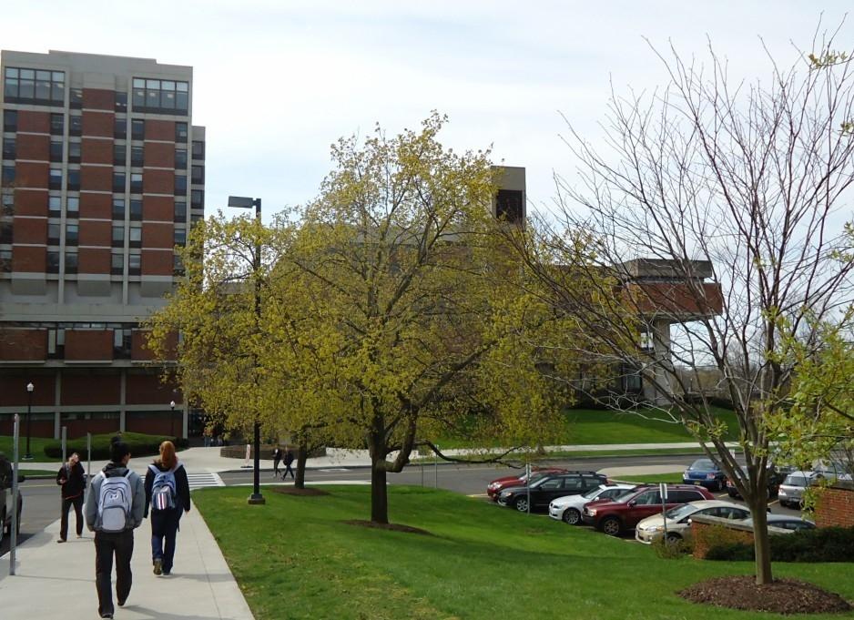 罗切斯特大学(Rochester)照片